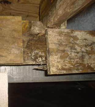 Extensive basement rot found in Sioux City by Thrasher