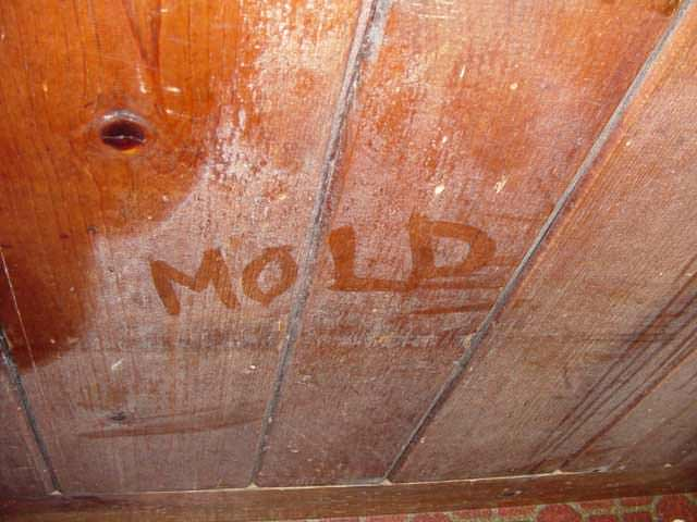 ... The Word Mold Written With A Finger On A Moldy Wood Wall In Norfolk ...
