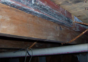 Rotting, decaying wood from mold damage in York